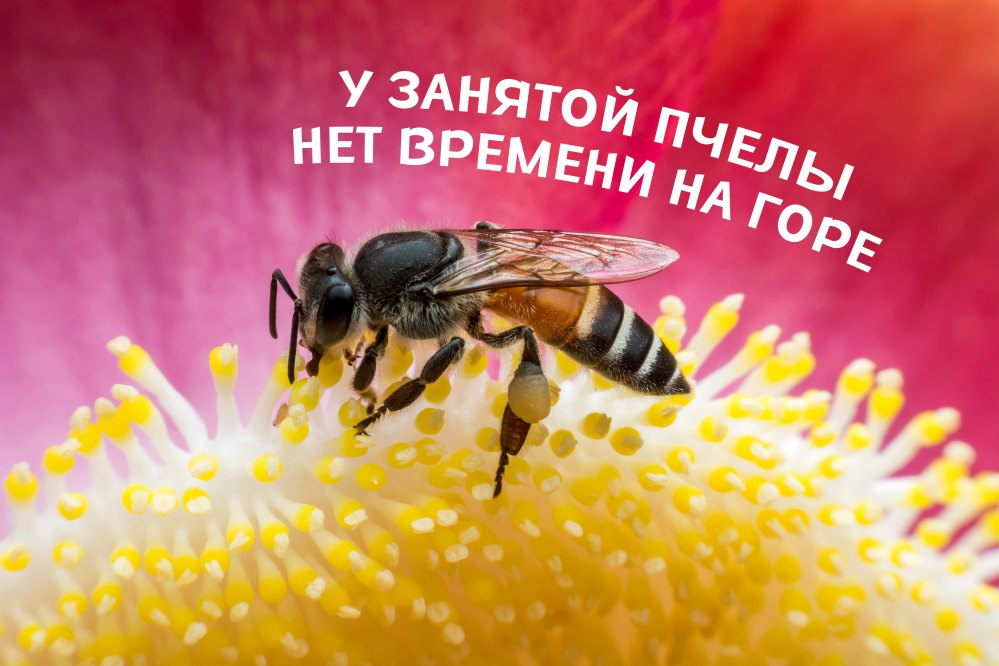 Шрифт Bee Leave Cyrillic